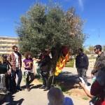 <!--:es-->Un olivo y un almendro hermanan la tierra palestina con el campo de Los Almendros de Alacant<!--:-->